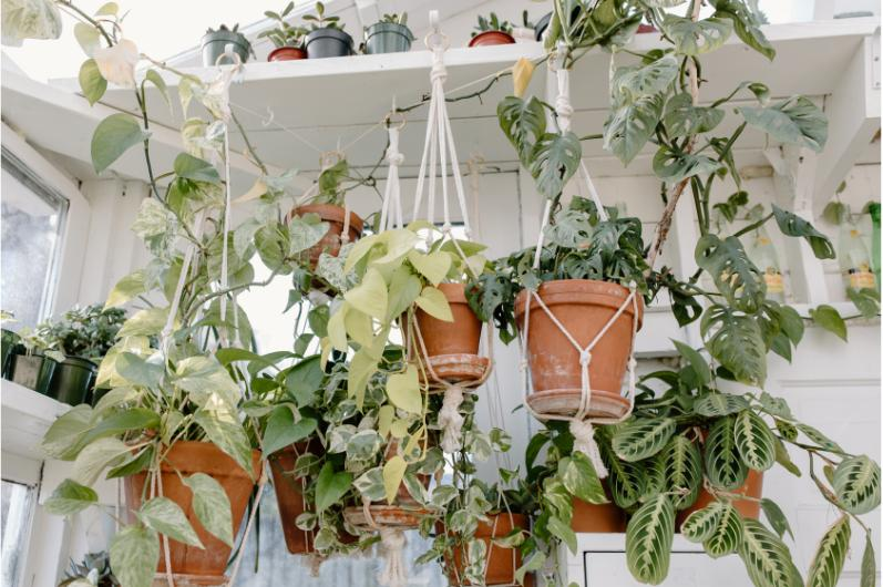 I v malém prostoru se dají pěstovat ve větším množství rostliny