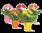 rostliny, semena