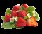 mražené ovoce logo